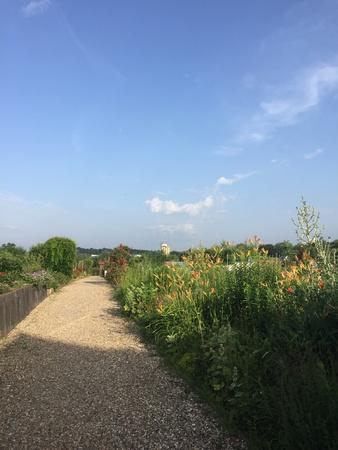Gravel footpath into the garden