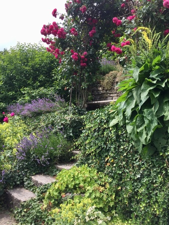 Hillside garden with rose bush at summer Фото со стока