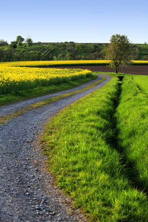Winding country road along a blooming rape field