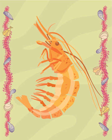 Shrimp in a decorative illustration illustration