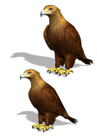 perching: Two 3D eagle illustrations