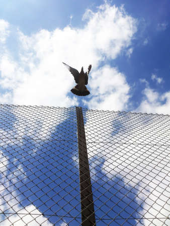 send to prison: Flying pigeon over a fence