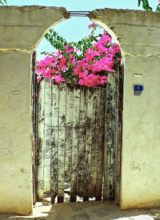 Old wooden door with flowers on top photo