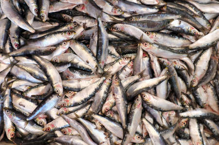coif: Group of dead small fish caught by fishermen Stock Photo