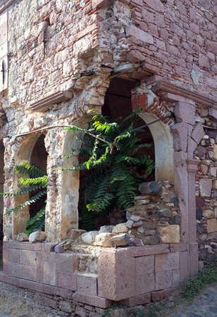 church ruins: Plants grown inside the old church ruins