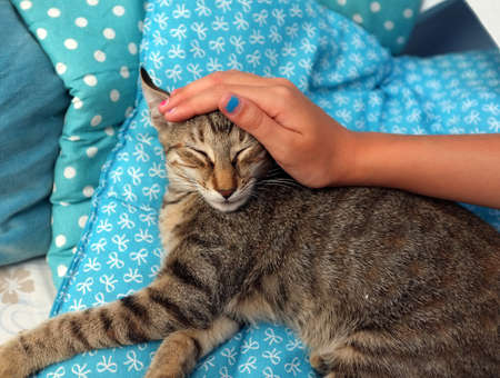 petting: Girls hand is petting a cat