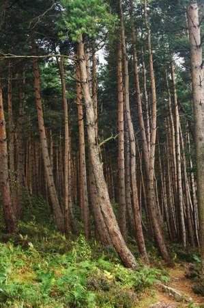 Trees in Yorkshire woodland Zdjęcie Seryjne