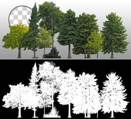 Cutout tree line. Coniferous and decidious. Row of green trees and pines isolated on white background via an alpha channel. Forestscape. High quality clipping mask for professional composition.