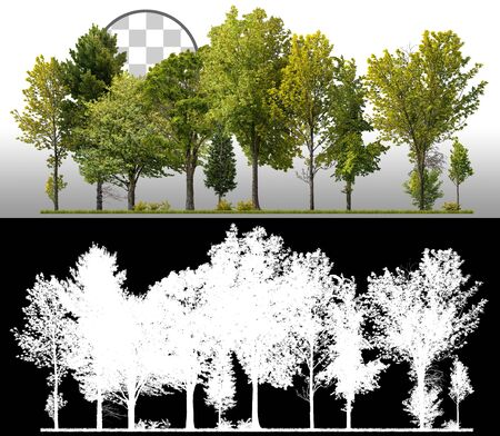 Cutout tree line. Green trees in summer. Row of trees and shrubs isolated on white background via an alpha channel. Forestscape. High quality clipping mask for professional composition.