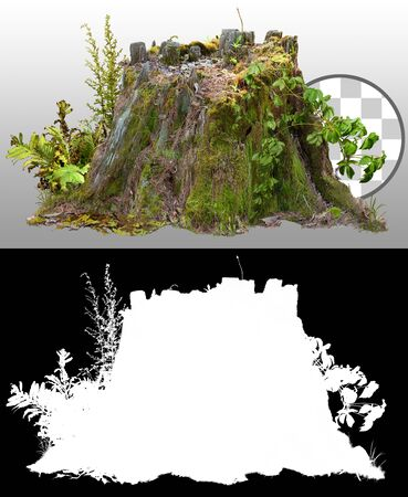 Old stump covered with moss. Cut out tree stump. Old tree stub isolated on a transparent background via an alpha channel. Dead tree. High quality clipping mask for professional composition. Фото со стока