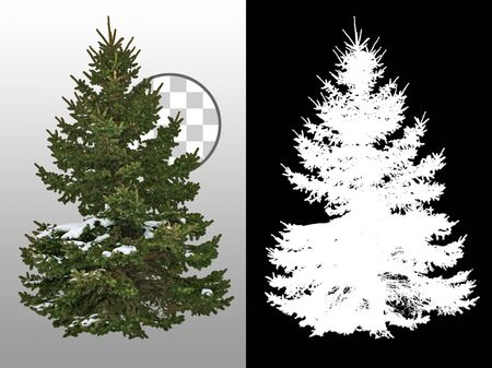 Cut out pine tree in winter. Snowy tree Snow covered fir tree in winter. Pine tree isolated on transparent background. Cutout coniferous. High quality clipping mask for professional composition.