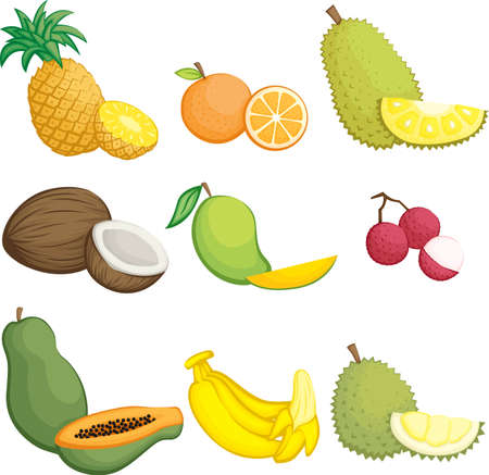 lychee: illustration of tropical fruits icons Illustration