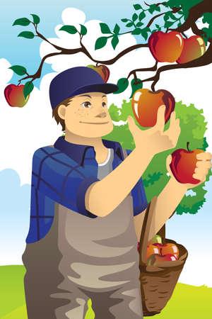 Een illustratie van een boer het plukken van appels uit de boom