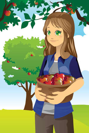 A vector illustration of a farmer picking apples from the tree