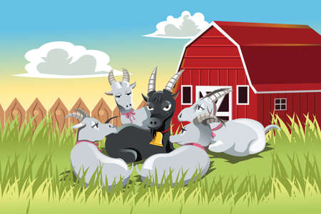 A vector illustration of a male goat surrounded by female goats in a farm Çizim