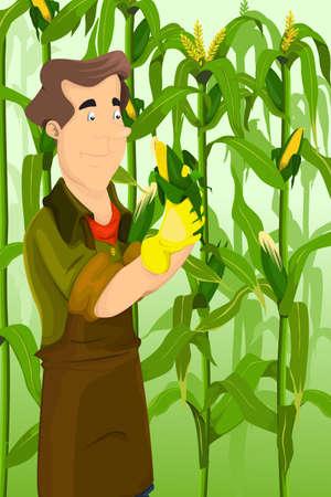 A vector illustration of happy farmer harvesting corns in a field Illustration