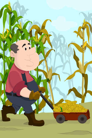 A vector illustration of happy farmer harvesting corns in a field Vector