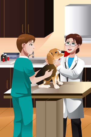 veterinarians: illustration of a  veterinarian examining a cute dog
