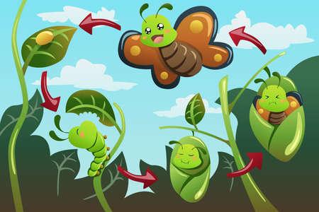 oruga: Una ilustraci�n vectorial de ciclo de vida de la mariposa