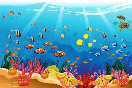 jelly fish: A vector illustration of marine underwater scene