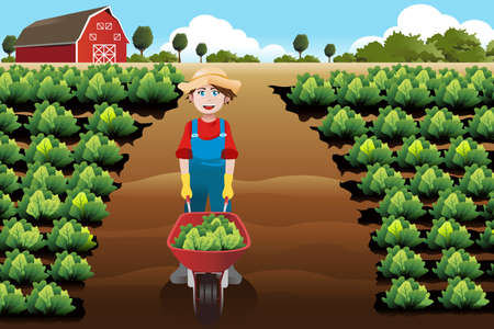 A vector illustration of little boy working in a vegetable farm Vector