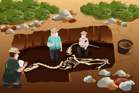 discovering: A vector illustration of archaeologist discovering a dinosaurs fossil
