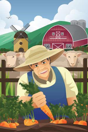 cartoon farmer: A vector illustration of farmer harvesting carrots in a farm