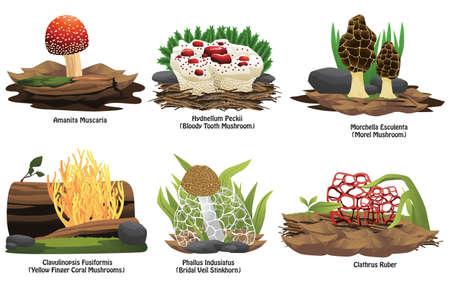 phallus: A vector illustration of different types of mushroom