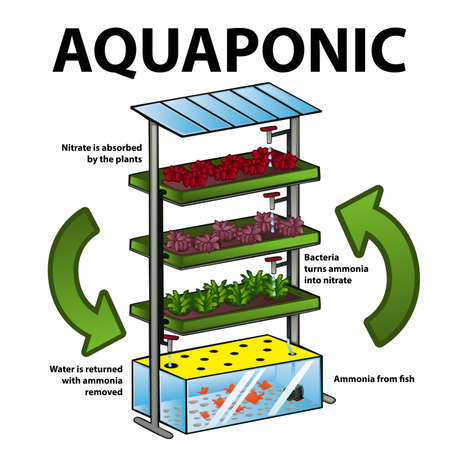 A vector illustration of aquaponic system Иллюстрация