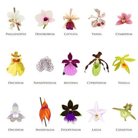 Een vector illustratie van orchidee pictogram sets