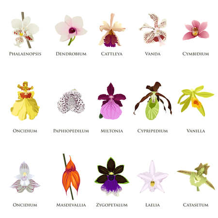 vainilla flor: Una ilustración vectorial de orquídeas conjuntos de iconos