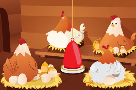 A vector illustration of chicken hatching eggs in a barn