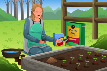 planting: A vector illustration of beautiful woman planting herbs in herb garden Illustration