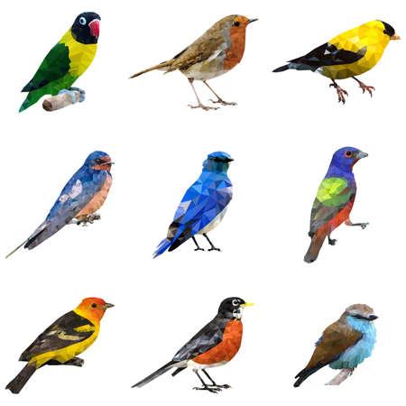 oiseau dessin: Une illustration de vecteur de type d'oiseaux différents