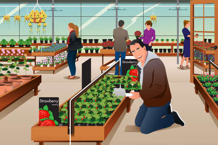 buying: A vector illustration of man buying strawberry plant in a gardening centre