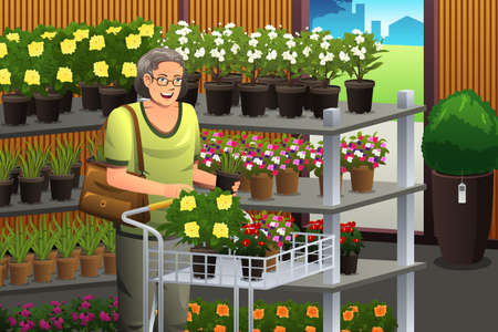 A vector illustration of senior woman shopping plant Vectores