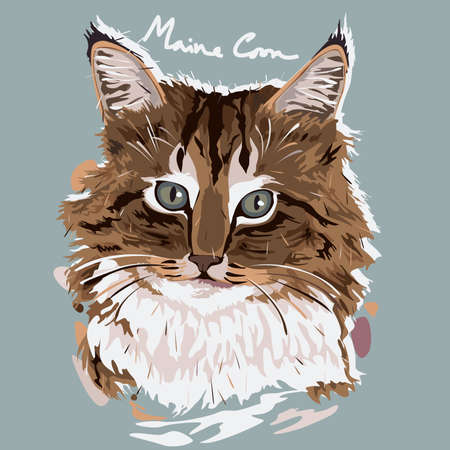 breeds: A vector illustration of Maine Coon Painting Poster