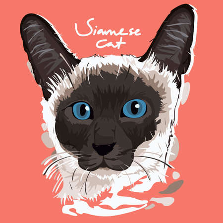 siamese: A vector illustration of Siamese Cat Painting Poster