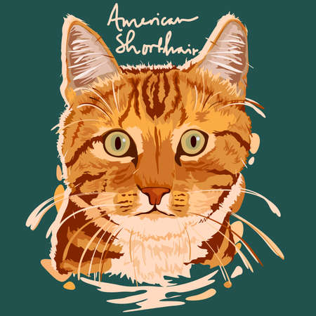 A vector illustration of American Shorthair Painting Poster