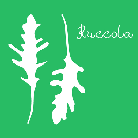 Vector hand drawn illustration of ruccola. White linear art of arugula. Poster with healthy vegetarian food. Art can be used for cafe restaurant menu design. Ilustrace