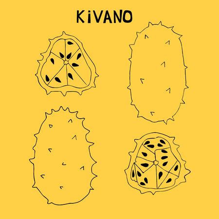 Linear set of kivano, african prickly cucumber,horned melon. Rare fruit originally from Africa. Two whole kivano and two slices with seeds. Illustration
