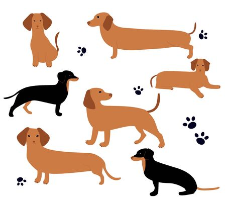 Vector set with German badger-dog. Cute cartoon character. Different dachshund poses. 向量圖像