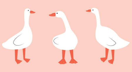 Vector illustration with geese. Cute cartoon characters.
