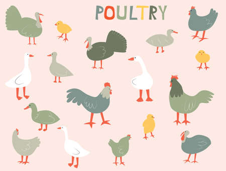 Vector illustration with poultry - chicken, rooster, chick, geese; ducks; turkey. Cute cartoon characters.