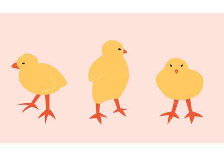 Vector illustration with chick. Cute cartoon characters.