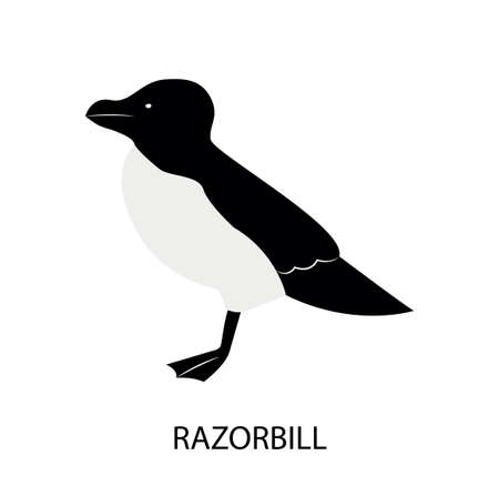 Illustration with razorbill - sea bird. Cartoon character. Illusztráció