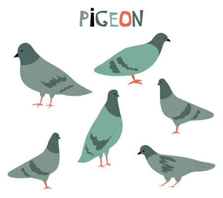 Vector illustration with cute cartoon pigeions.