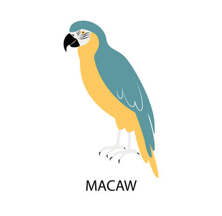 Illustrationwith bright bird - macaw parrot.