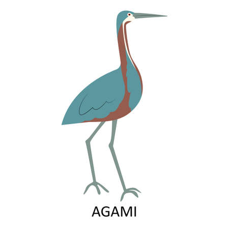 Illustration with agami - bird of South America
