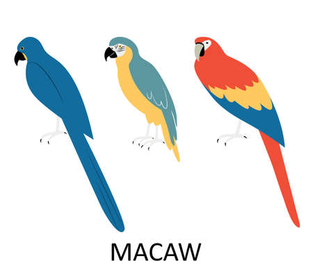 Illustration with macaw. Cartoon character of bird.